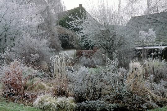 Garten-groene.de :: Garten Gröne :: Winter In Der Sonne :: De Gartengestaltung Im Winter